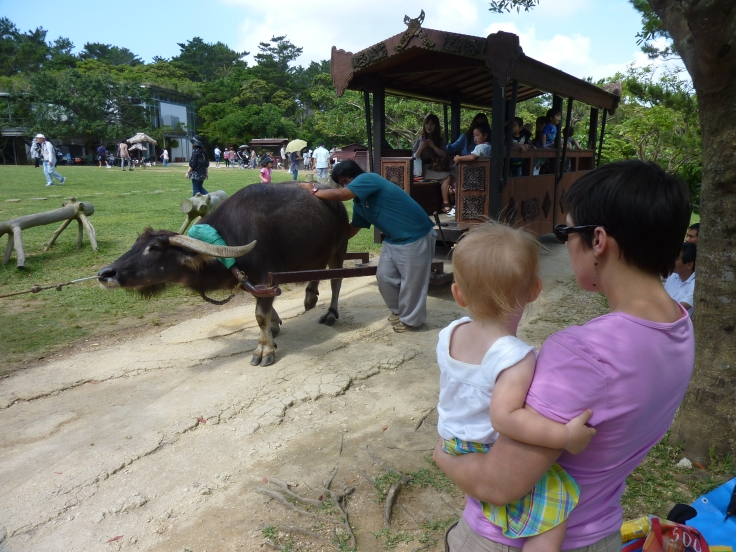 Watching the water buffalo