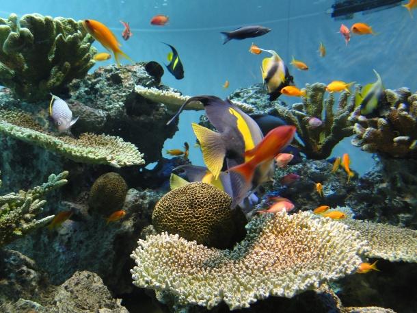 Sea life on display