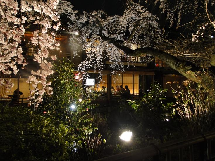 Gion through floodlit sakura