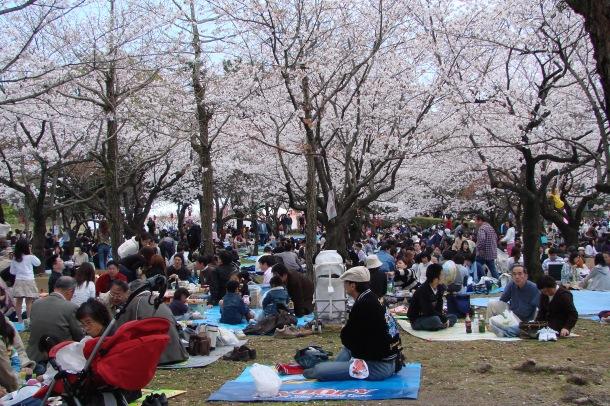 A hanami party