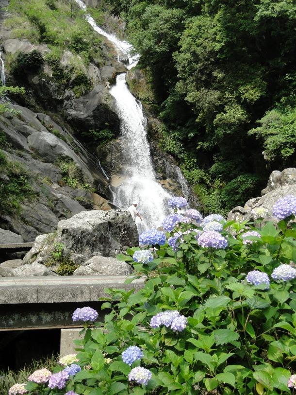 Miakeri Falls with hydrangea