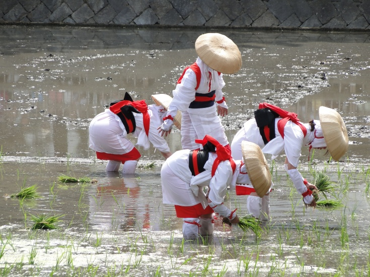 Girls planting new rice shoots