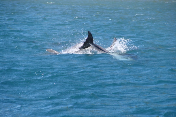 The tail of a dolphin