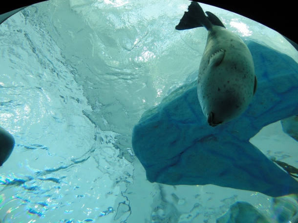 Looking up at one of the aquarium's seals
