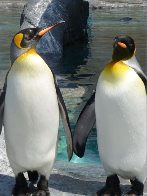 Penguins at Asahiyama Zoo