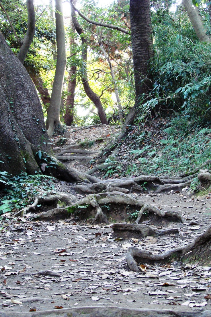The Daibutsu Hiking Course