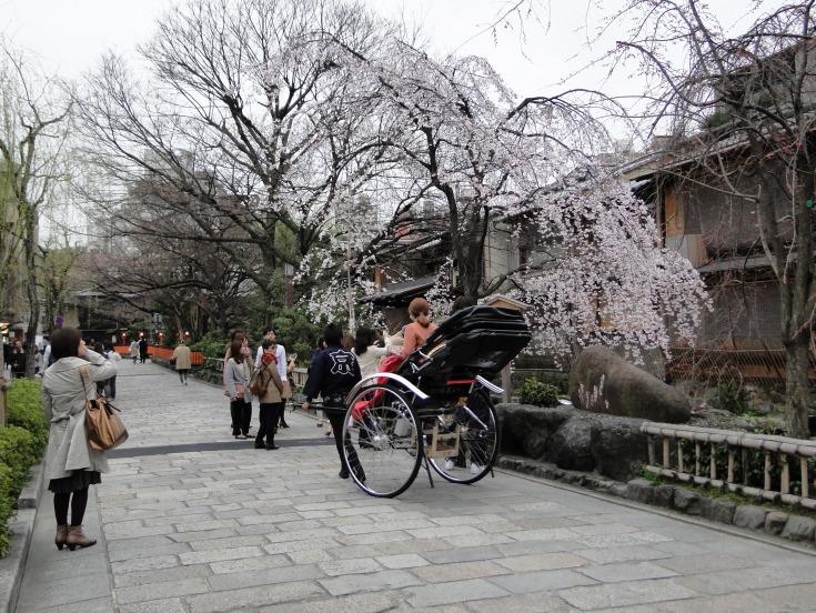 The Shirakawa area of Gion in springtime