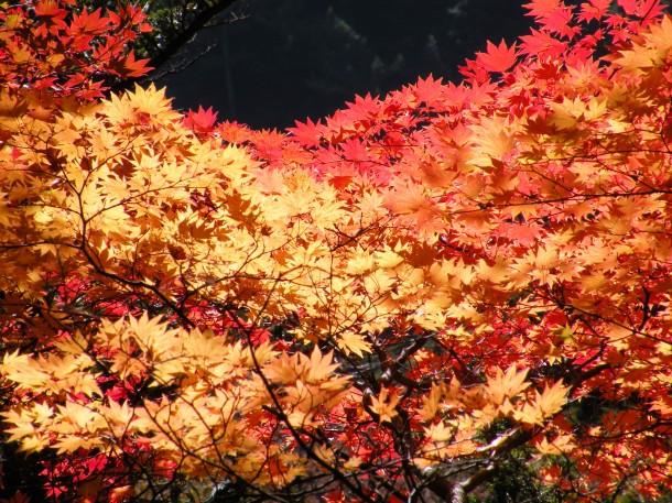 Fall color in Kamikochi