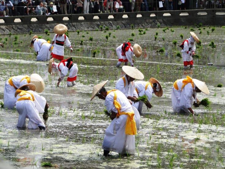 Planting rice at the Sumiyoshi Shrine