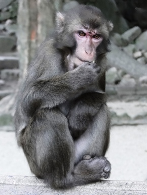 Family Fun: Takasakiyama Monkey Park (Oita)