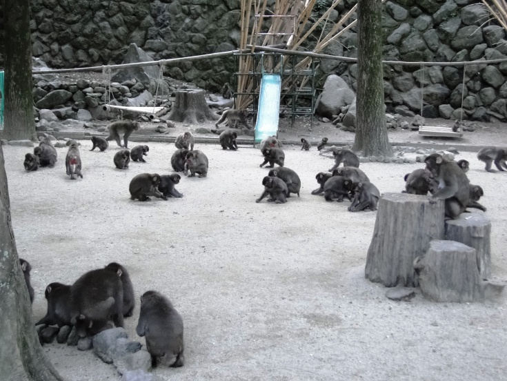Macaques gathered around the central play area