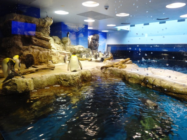 Part of the penguin enclosure