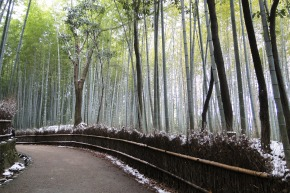 Better Know a Neighborhood: Arashiyama