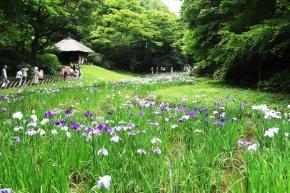 Top 5 Iris Gardens in the TokyoArea