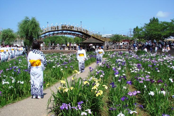 Itako Iris Festival