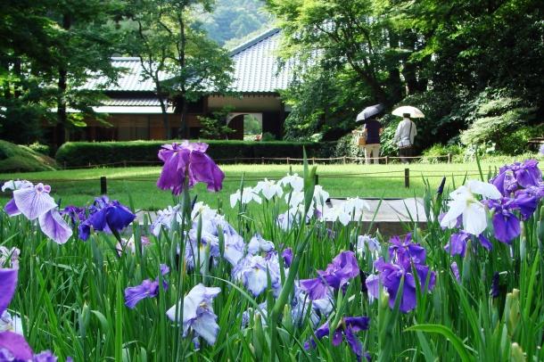 Meigetsu-in Iris Garden