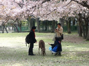 Better Know a Neighborhood: Nara Park (Nara)