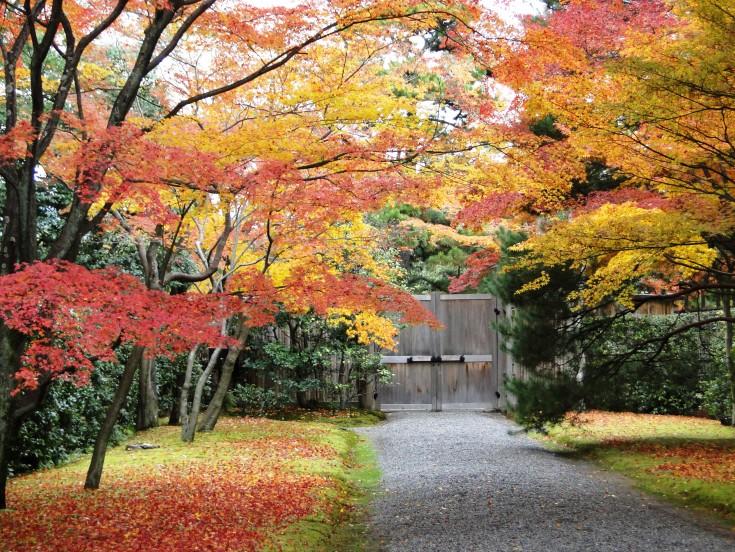 More autumn color