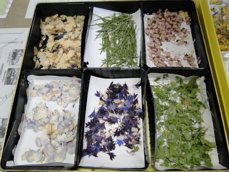 Selection of dried flowers for decoration