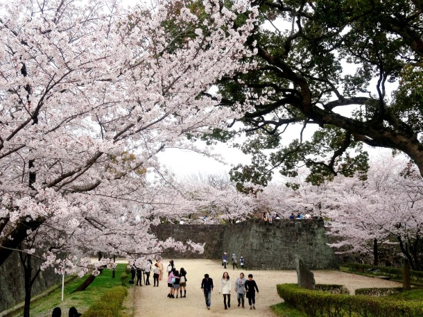 Doing o-hanami at Kumamoto Castle