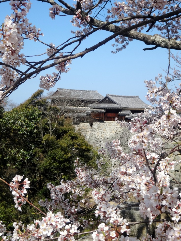 Cherry blossoms on the castle grounds