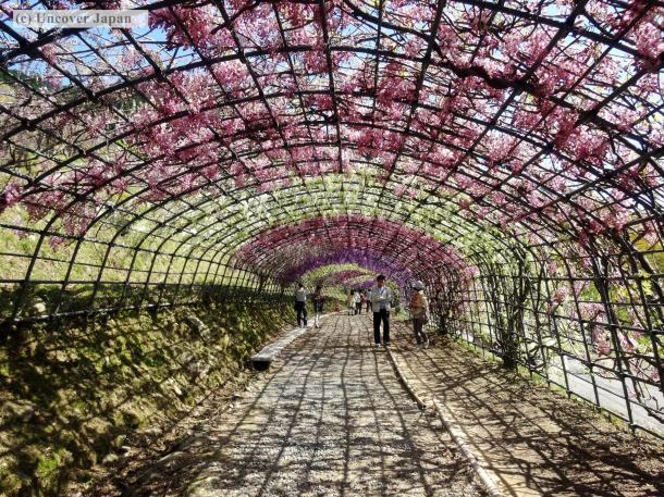 Kawachi Fujien - Behold the beauty