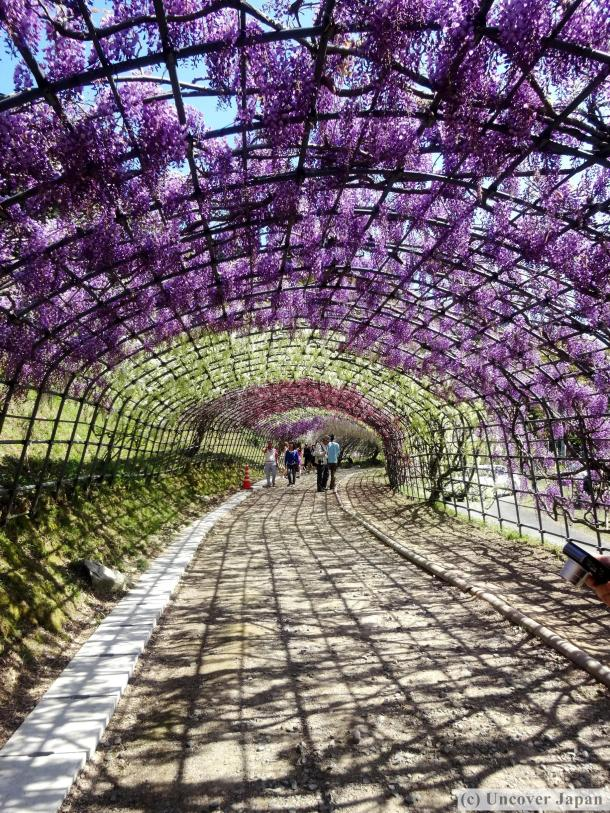 Purple happens to be my favorite color so this garden ranks top on my list!