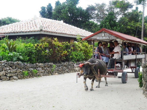 Water buffalo cart