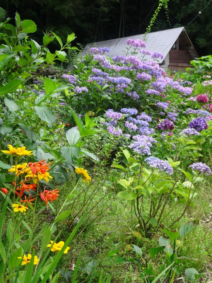 Summer wildflowers in Shimane Prefecture