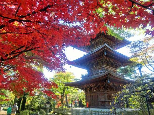 Maples near Gotokuji's pagoda