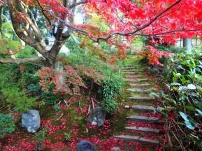 Top 5 Hidden Foliage Spots inKyoto