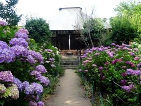 Spotlight: Hondo-ji (Chiba)